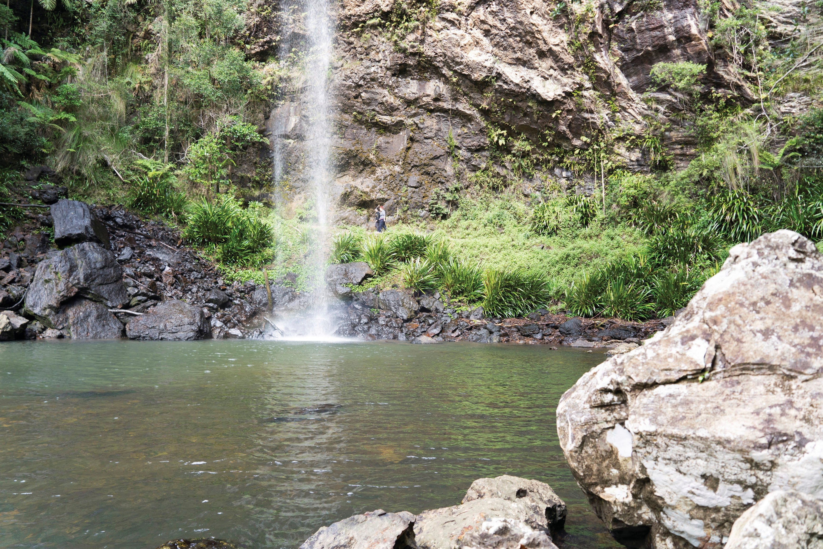 Twin Falls Circuit Springbrook National Park - WA Accommodation