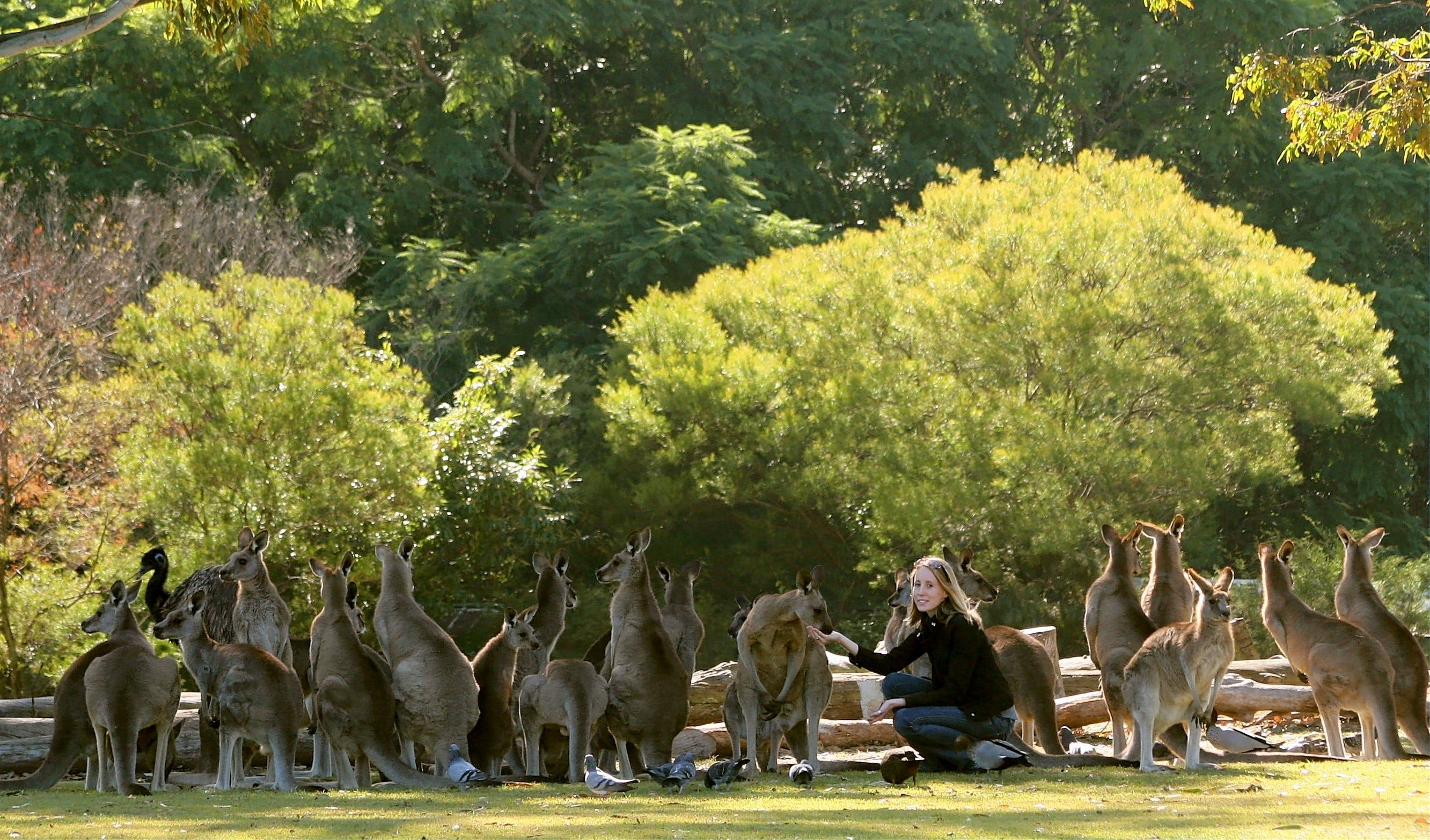 Lone Pine Koala Sanctuary - WA Accommodation