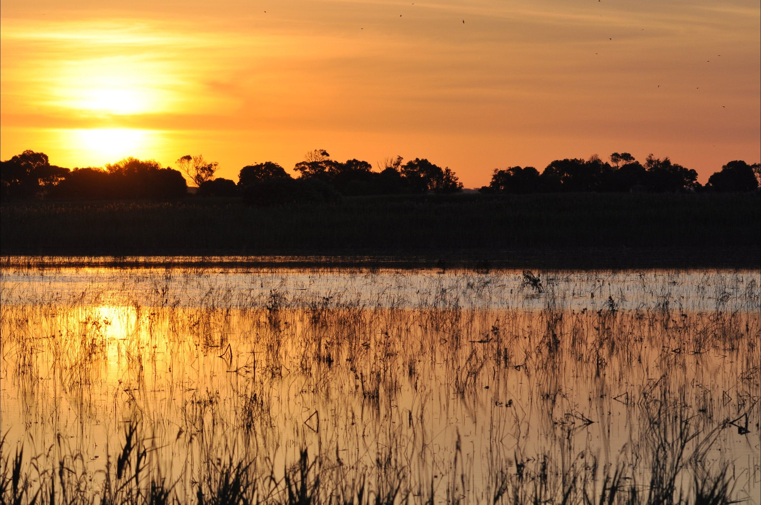 Bool Lagoon Game Reserve and Hacks Lagoon Conservation Park - WA Accommodation