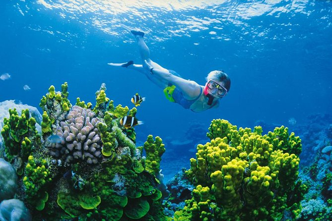 Full Day Snorkel In The Great Barrier Reef - WA Accommodation