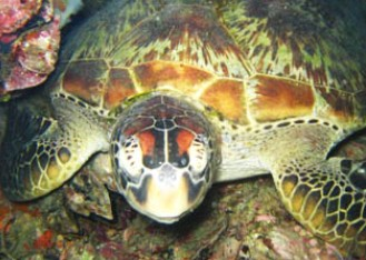 Adrenalin Snorkel and Dive - WA Accommodation