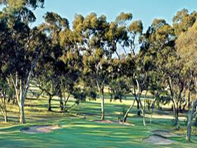 Tanunda Pines Golf Club - WA Accommodation