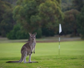 Anglesea Golf Club - WA Accommodation