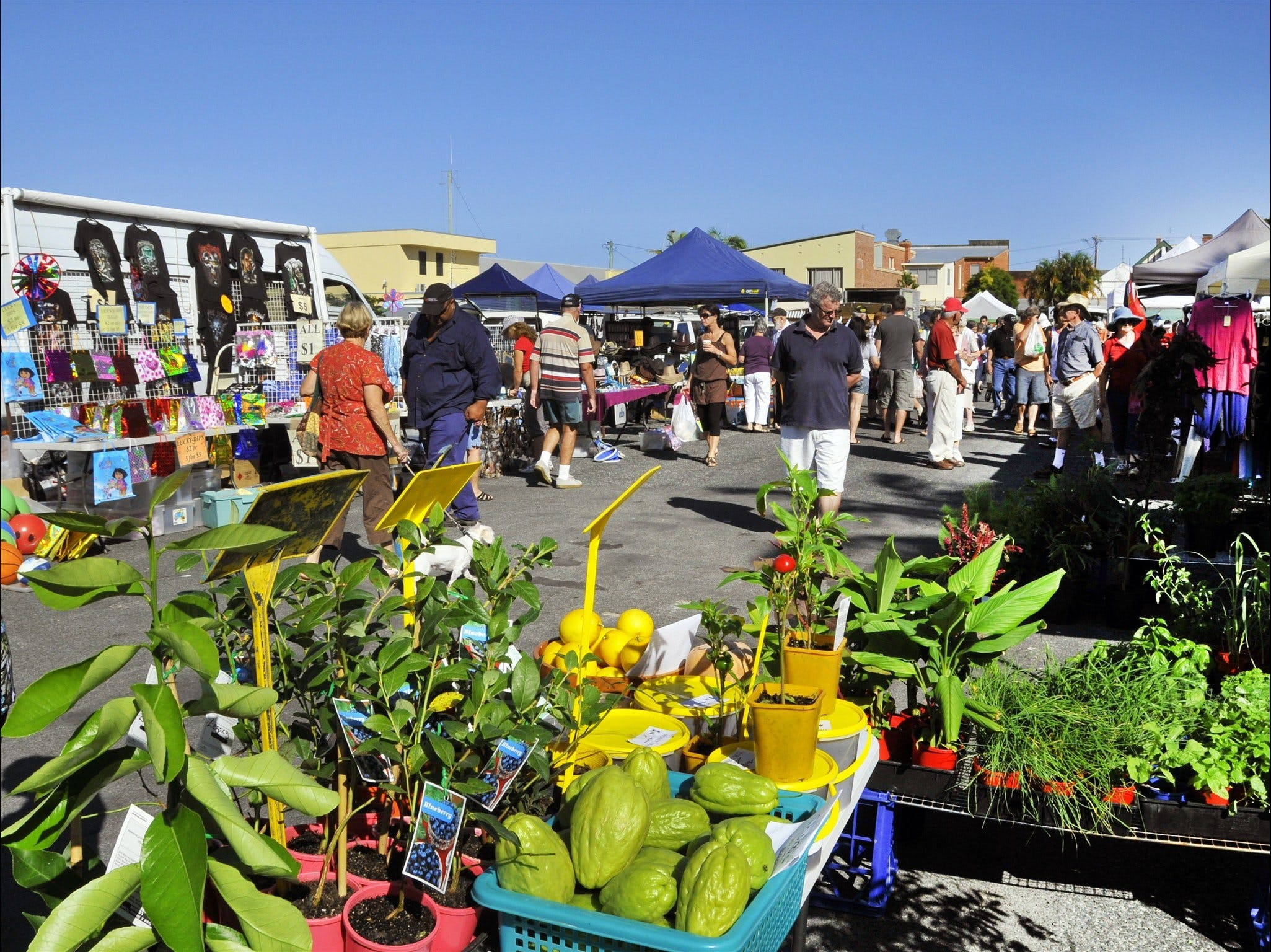 Maclean Community Monthly Markets - WA Accommodation