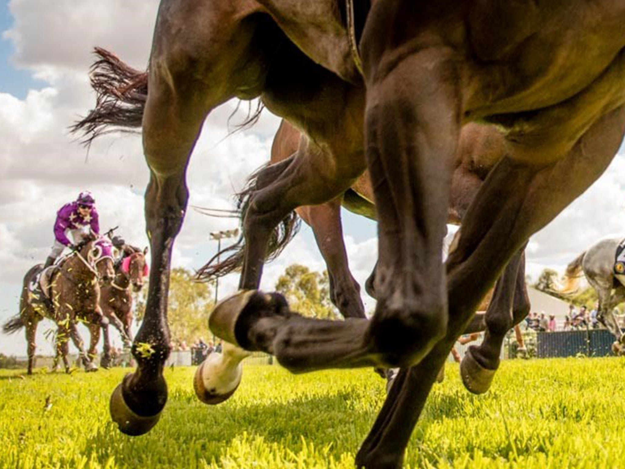 Night Markets and Race Day - WA Accommodation
