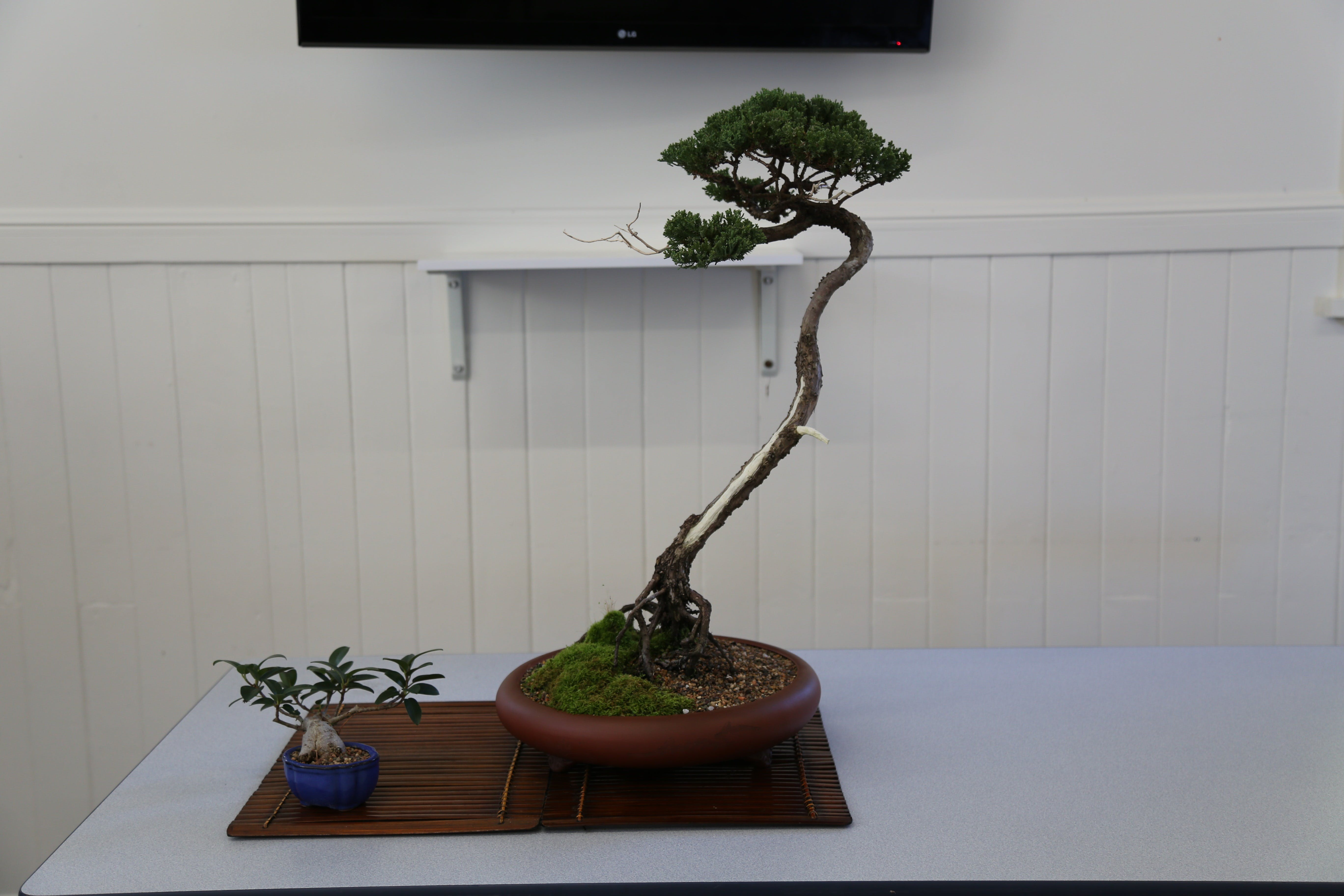 Wauchope Bonsai Workshop Group - WA Accommodation