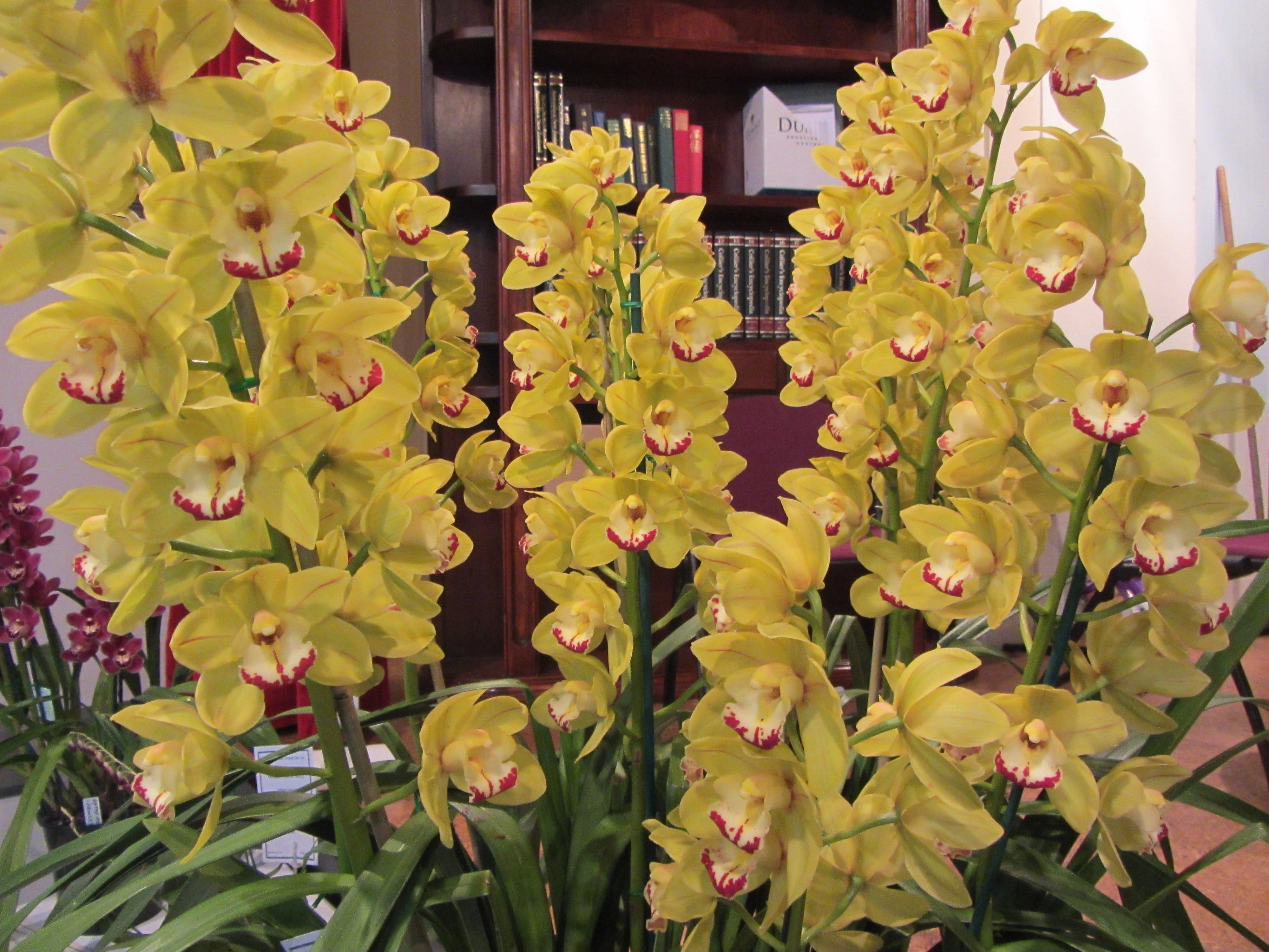 Sapphire Coast Orchid Club Winter Orchid Show - WA Accommodation