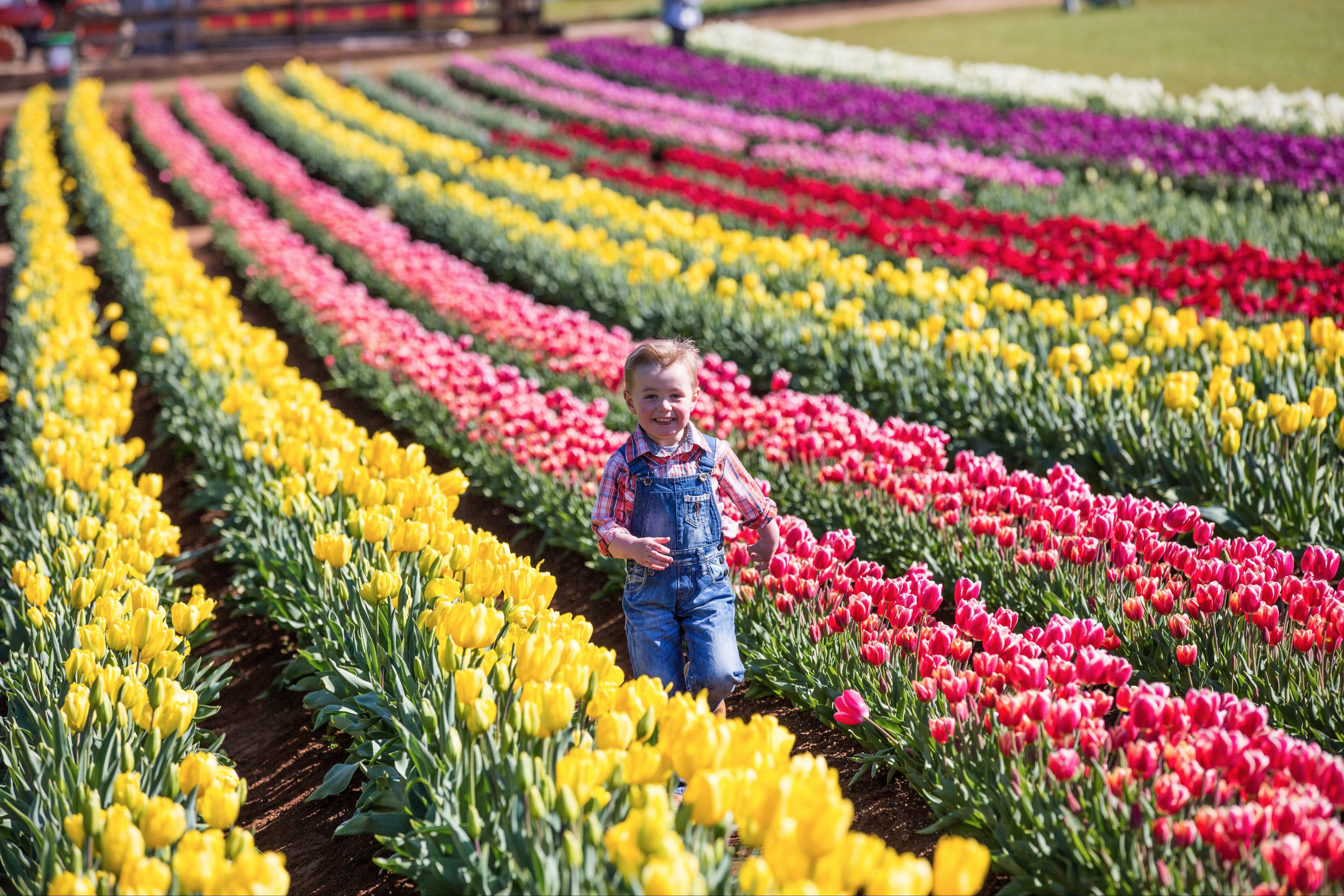 Tesselaar Tulip Festival - WA Accommodation