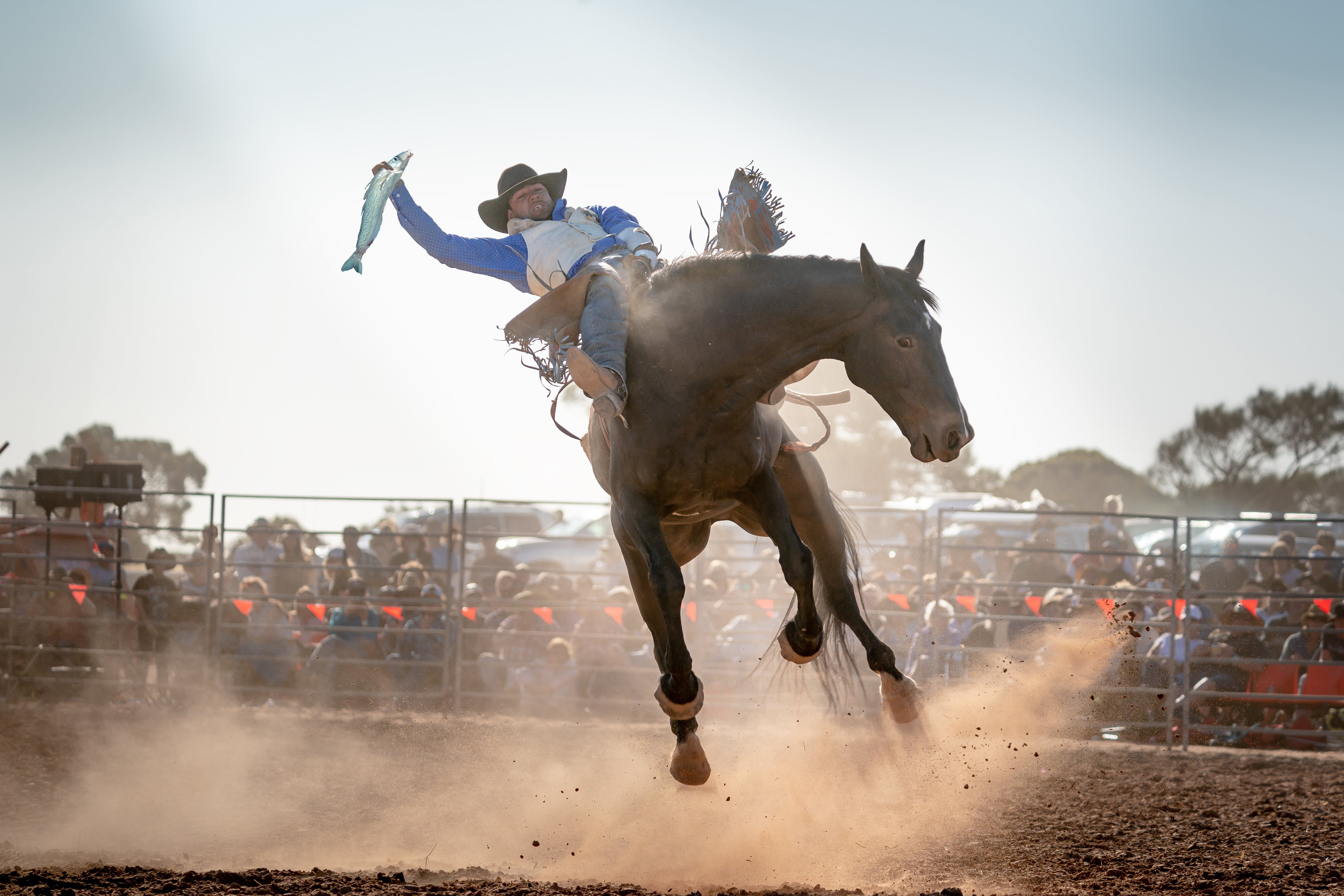 Rodeo by the Sea - Streaky Bay - WA Accommodation